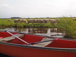 sheep-and-canoe